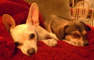 Churro and Penny...napping, of course!